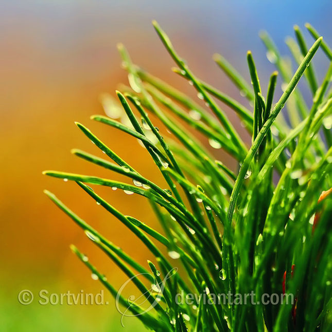 Noi fotografii superbe semnate Sortvind - Poza 20