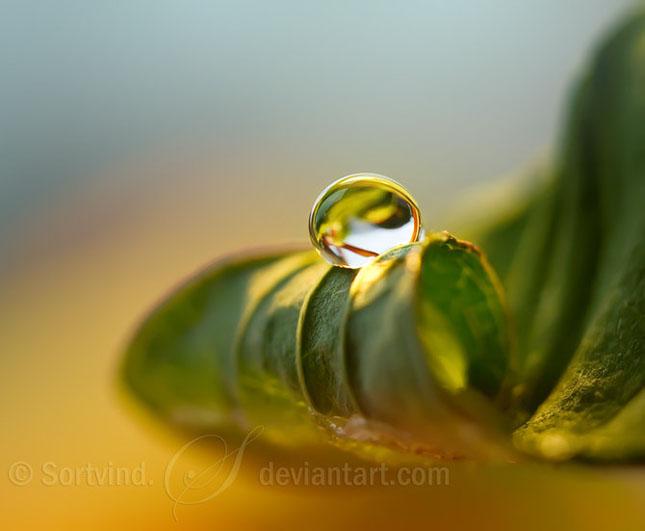 Noi fotografii superbe semnate Sortvind - Poza 26