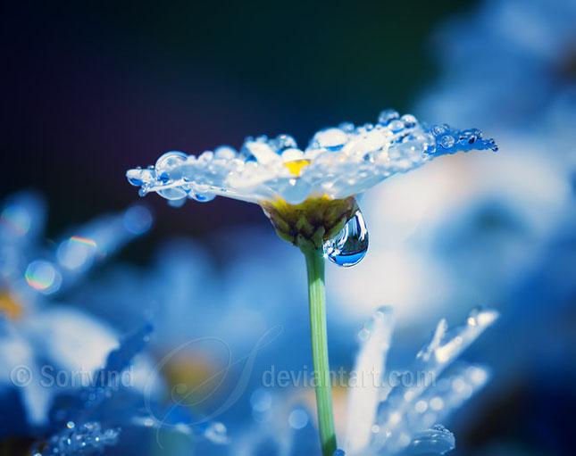Noi fotografii superbe semnate Sortvind - Poza 28