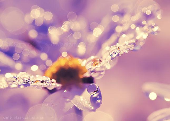Noi fotografii superbe semnate Sortvind - Poza 29