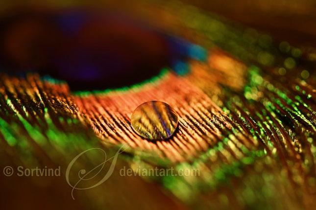 Noi fotografii superbe semnate Sortvind - Poza 31