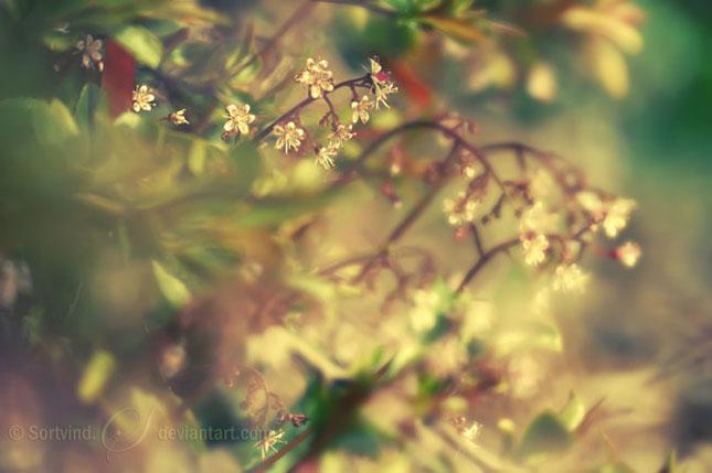 Noi fotografii superbe semnate Sortvind - Poza 32