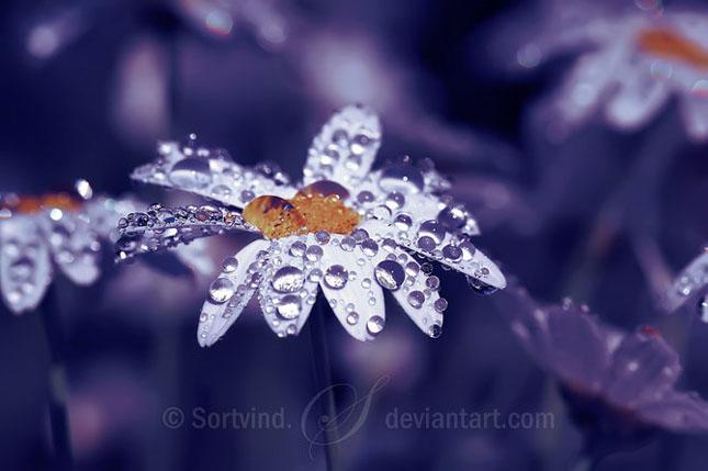 Noi fotografii superbe semnate Sortvind - Poza 35