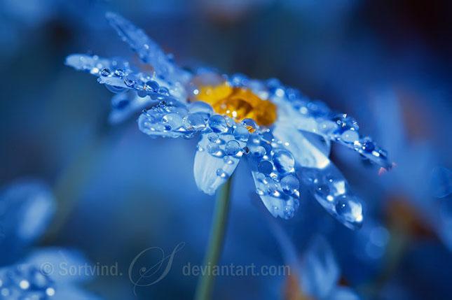 Noi fotografii superbe semnate Sortvind - Poza 37