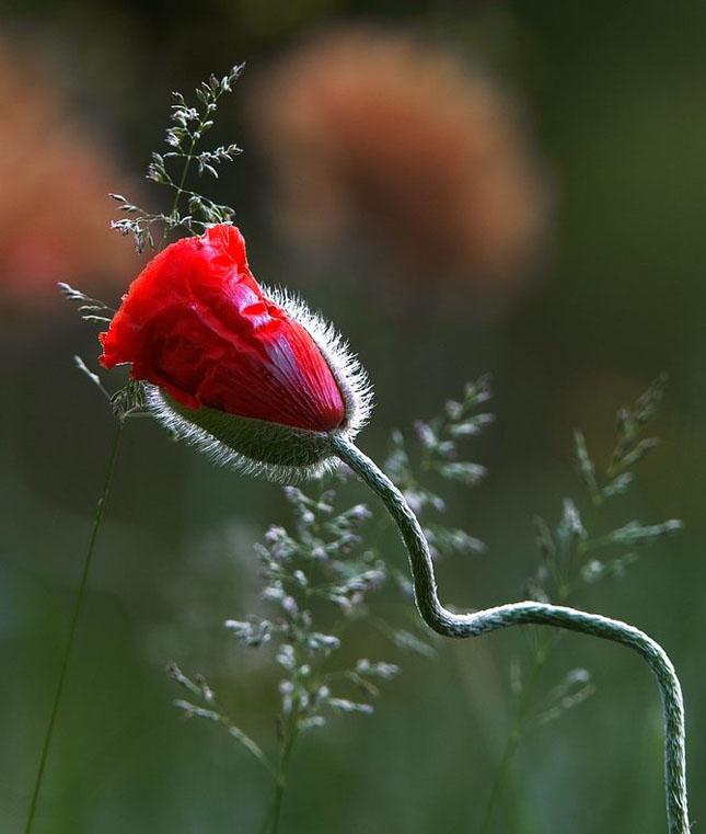 Andris Eglitis - fotograf peisagist - Poza 3