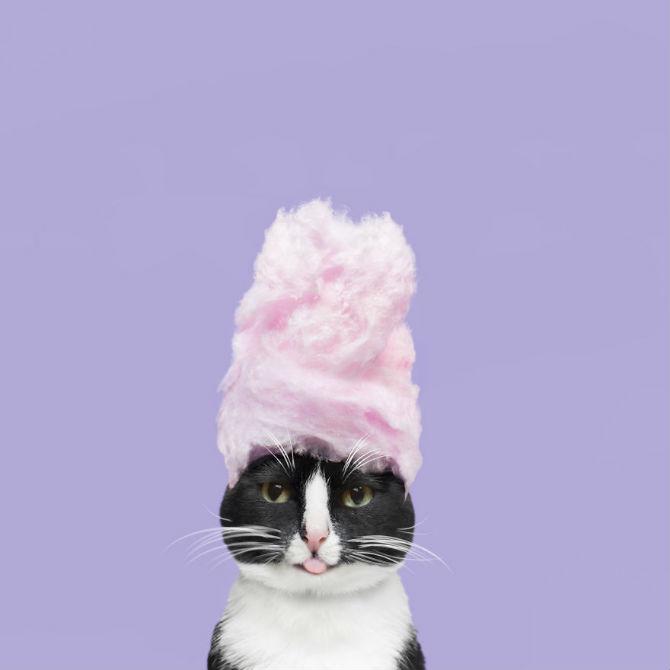 Cheeto, o pisica haioasa, intr-un pictorial trasnit - Poza 20