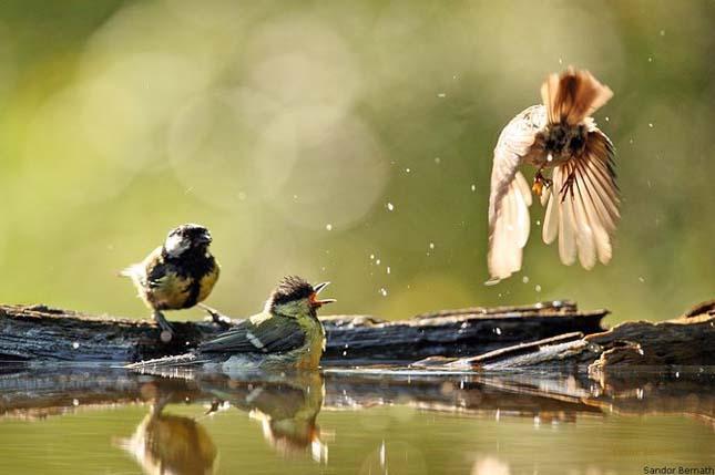 Fotografie profesionista semnata Sandor Bernath