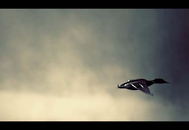 Nicolas Bouvier - Pasari la orizont - Poza 7