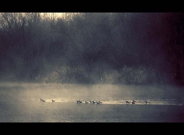 Nicolas Bouvier - Pasari la orizont - Poza 26