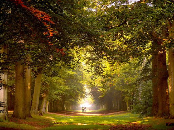 Jocuri intre lumina naturala, umbre, frunze de toate culorile... - Poza 1