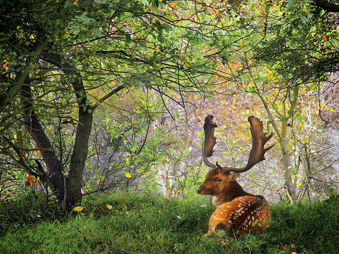 Jocuri intre lumina naturala, umbre, frunze de toate culorile... - Poza 2