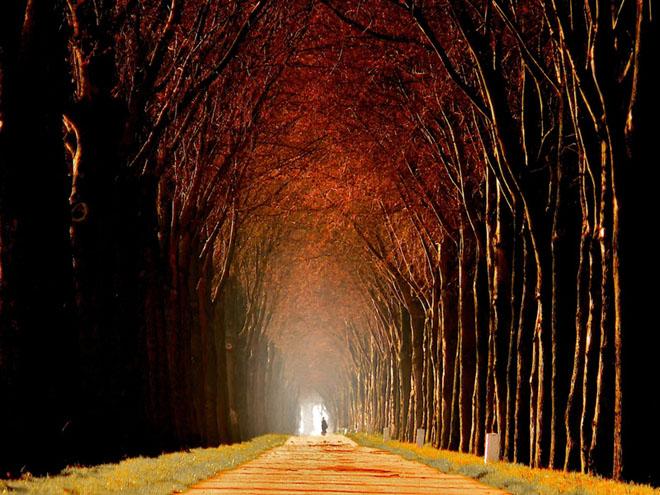 Jocuri intre lumina naturala, umbre, frunze de toate culorile... - Poza 3
