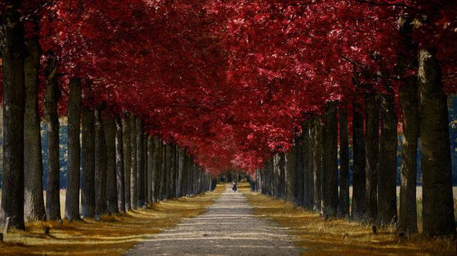 Jocuri intre lumina naturala, umbre, frunze de toate culorile... - Poza 4