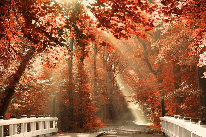 Jocuri intre lumina naturala, umbre, frunze de toate culorile... - Poza 5