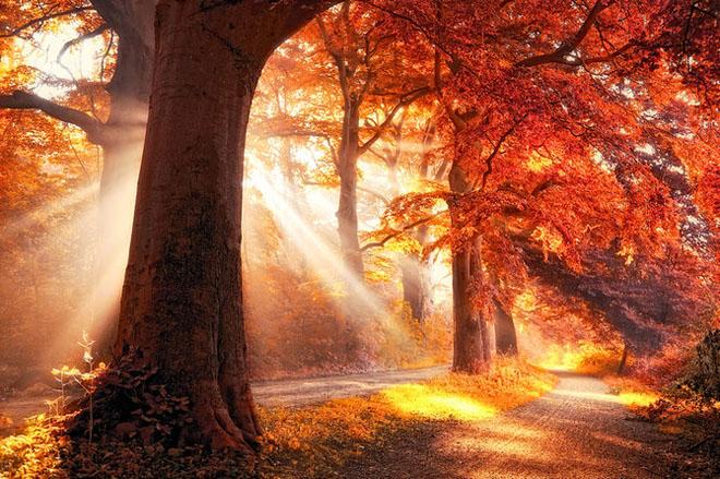 Jocuri intre lumina naturala, umbre, frunze de toate culorile... - Poza 6