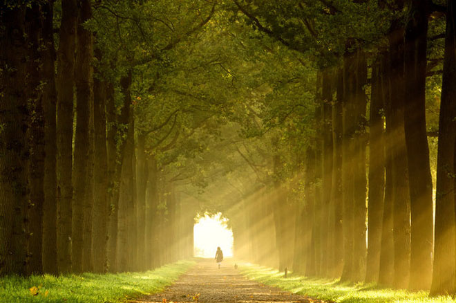Jocuri intre lumina naturala, umbre, frunze de toate culorile... - Poza 7