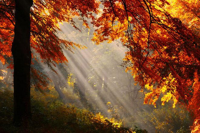 Jocuri intre lumina naturala, umbre, frunze de toate culorile... - Poza 8