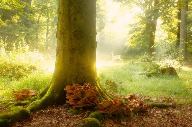 Jocuri intre lumina naturala, umbre, frunze de toate culorile... - Poza 9