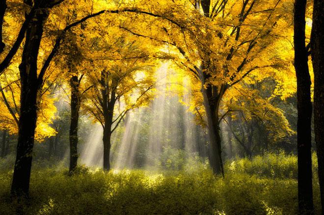 Jocuri intre lumina naturala, umbre, frunze de toate culorile... - Poza 10