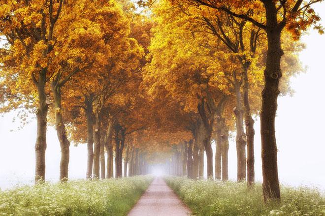 Jocuri intre lumina naturala, umbre, frunze de toate culorile... - Poza 13