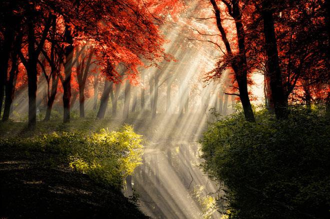 Jocuri intre lumina naturala, umbre, frunze de toate culorile... - Poza 14