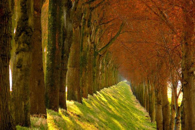 Jocuri intre lumina naturala, umbre, frunze de toate culorile... - Poza 15