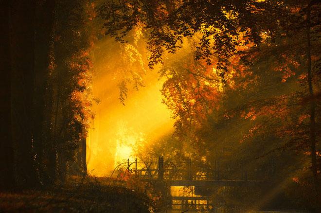Jocuri intre lumina naturala, umbre, frunze de toate culorile... - Poza 16