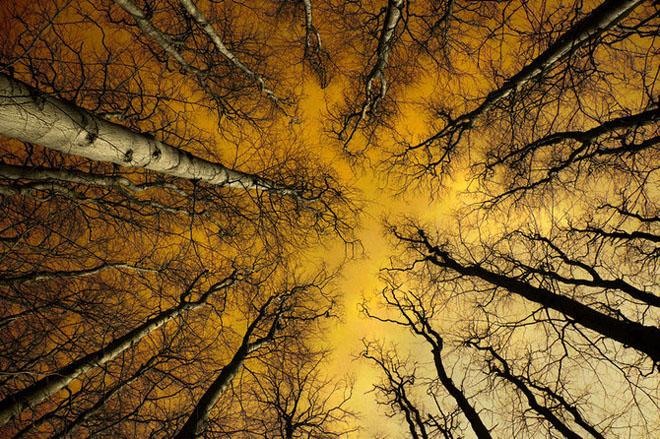 Jocuri intre lumina naturala, umbre, frunze de toate culorile... - Poza 18
