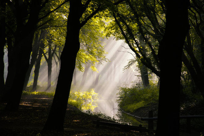 Jocuri intre lumina naturala, umbre, frunze de toate culorile... - Poza 19
