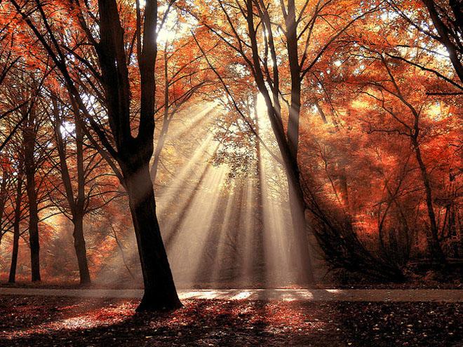 Jocuri intre lumina naturala, umbre, frunze de toate culorile... - Poza 20