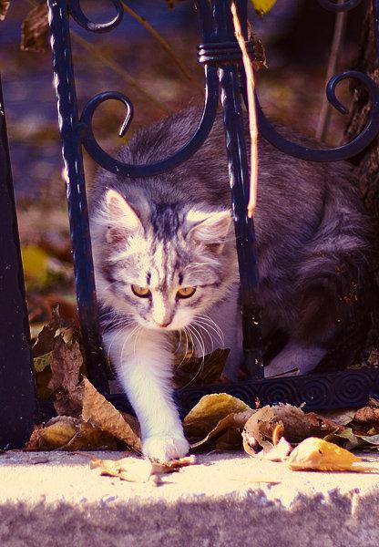 De vazut: 30 de poze cu pisicute - Poza 2
