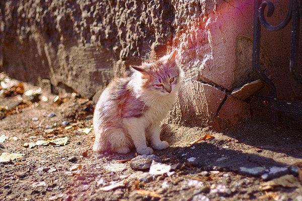 De vazut: 30 de poze cu pisicute - Poza 3