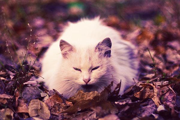 De vazut: 30 de poze cu pisicute - Poza 4