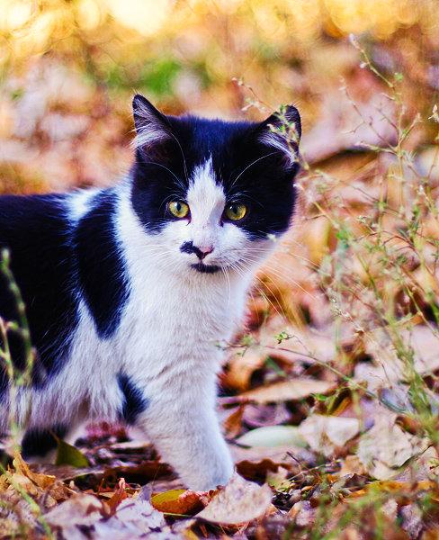 De vazut: 30 de poze cu pisicute - Poza 5