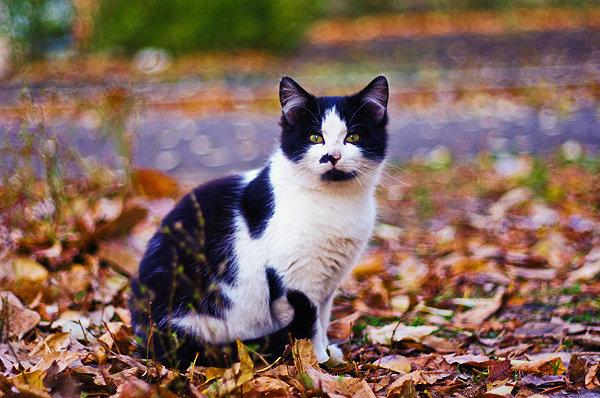 De vazut: 30 de poze cu pisicute - Poza 6
