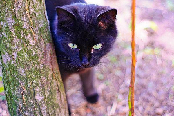 De vazut: 30 de poze cu pisicute - Poza 7