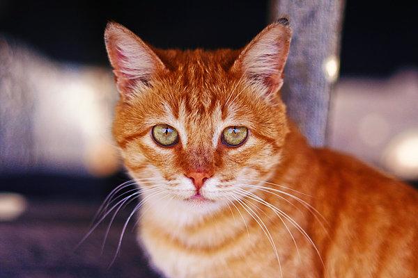 De vazut: 30 de poze cu pisicute - Poza 8