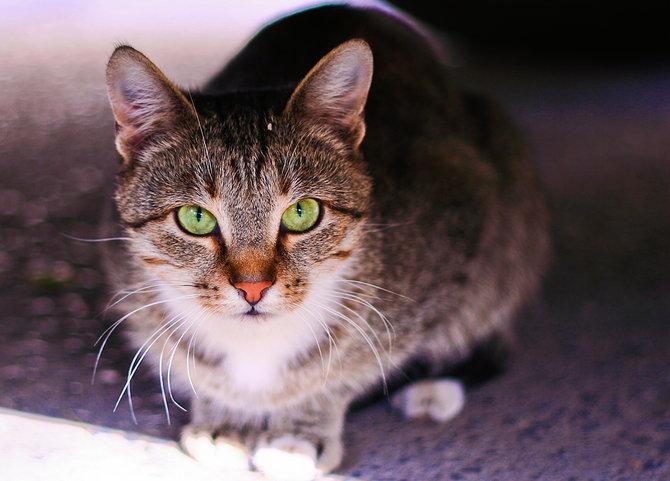 De vazut: 30 de poze cu pisicute - Poza 9
