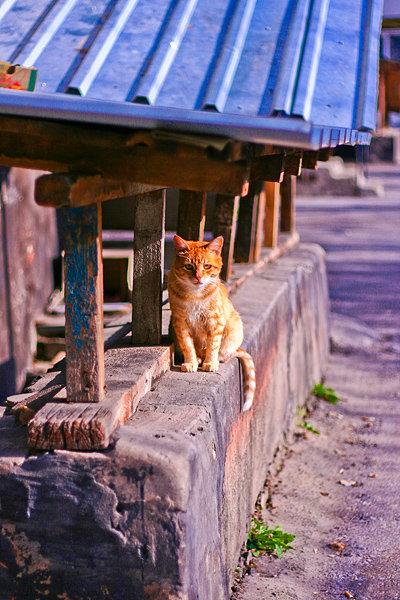 De vazut: 30 de poze cu pisicute - Poza 10