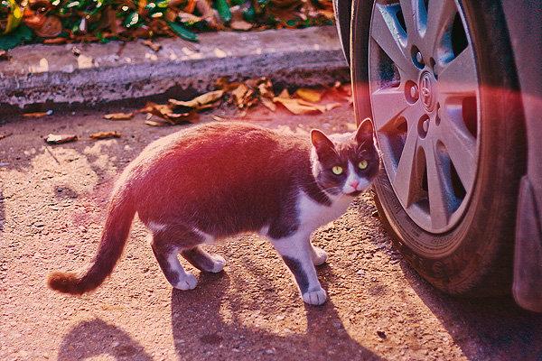 De vazut: 30 de poze cu pisicute - Poza 11
