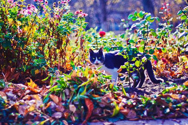 De vazut: 30 de poze cu pisicute - Poza 12
