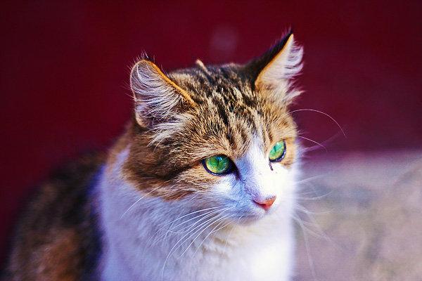 De vazut: 30 de poze cu pisicute - Poza 13