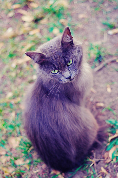 De vazut: 30 de poze cu pisicute - Poza 14
