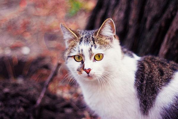 De vazut: 30 de poze cu pisicute - Poza 15