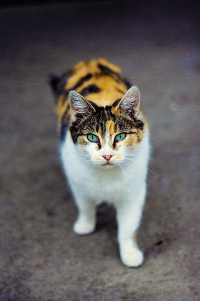 De vazut: 30 de poze cu pisicute - Poza 16