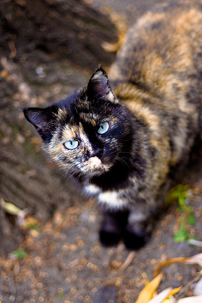 De vazut: 30 de poze cu pisicute - Poza 17