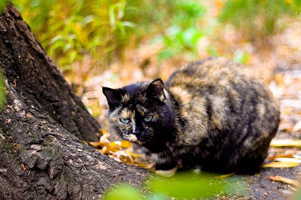 De vazut: 30 de poze cu pisicute - Poza 18