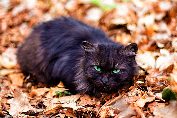 De vazut: 30 de poze cu pisicute - Poza 1