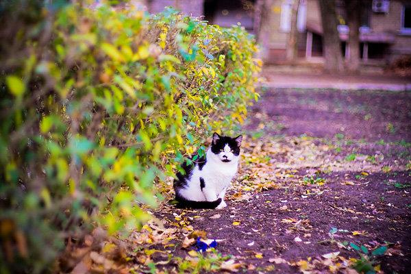 De vazut: 30 de poze cu pisicute - Poza 20