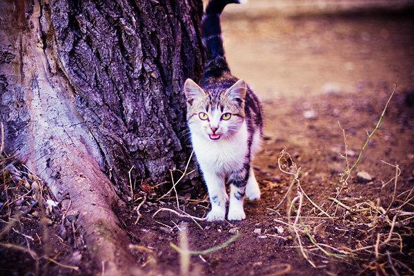 De vazut: 30 de poze cu pisicute - Poza 21